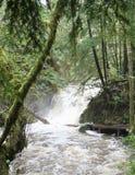 Wasserfall im Ucluelet-Regenwald kaskadiert in einen rasenden Fluss lizenzfreie stockfotografie