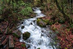 Wasserfall im Wald Stockfotos