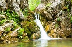 Wasserfall im Wald von Montenegro Stockfotos
