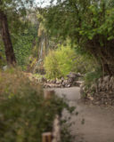 Wasserfall am japanischen Garten Stockfotografie