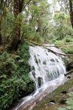 Wasserfall in Kew Mae Pan Nature Trail Lizenzfreie Stockfotografie
