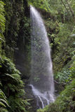 Wasserfall in Los Tilos (La Palma, Kanarische Inseln) Lizenzfreie Stockfotografie