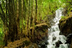 Wasserfall Mini Mojokerto Lizenzfreie Stockbilder