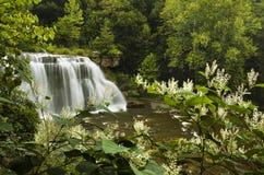 Wasserfall mit üppigen grünen Bäumen und Blumen Stockfotografie