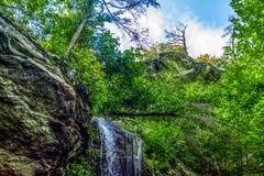 Wasserfall mit einzigem Baum Stockfoto