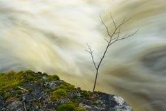 Wasserfall mit kleinem Baum Stockbild