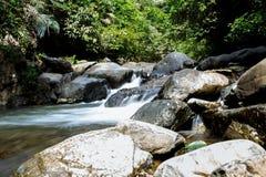 Wasserfall mit tiefgrünem Waldhintergrund Stockfotografie