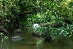 Wasserfall mit tiefgrünem Waldhintergrund Stockbild