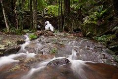 Wasserfall am Nebenfluss des Regenwaldes Lizenzfreies Stockfoto