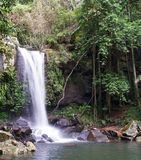 Wasserfall Springbrook Nationalpark Stockfoto