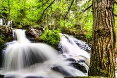 Wasserfall und Baum Lizenzfreie Stockfotografie