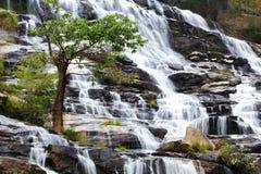 Wasserfall und -baum Stockfotos