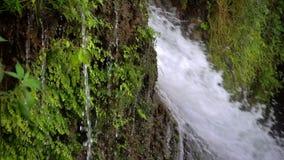 Wasserfall und grüne Natur stock video