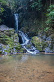 Wasserfall und kleiner See im Regenwald von Khao Sok sanctuar Lizenzfreie Stockbilder