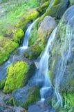 Wasserfall und Moos Lizenzfreie Stockfotografie