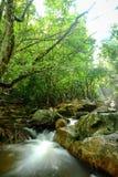 Wasserfall und rainforrest Lizenzfreies Stockfoto