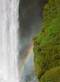 Wasserfall- und Seemöwennest Skogafoss Stockbild