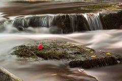 Wasserfall und stieg Stockbild