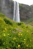 Wasserfall- und Wiesenblumen Seljalandsfoss, Island Lizenzfreies Stockfoto