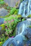 Wasserfall und wilde Blumen Stockfoto