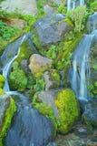 Wasserfall und wilde Blumen Stockfotografie