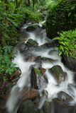 Wasserfall in Wald Stockfotografie
