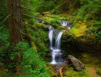 Wasserfall in Washington State Stockbilder