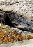 Wasserfall zwischen Stockbilder