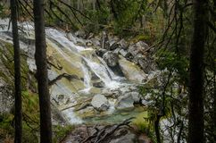 Wasserfallszene umfasst mit Kiefern - in den Bergen - Europa, hohes Tatras stockfotografie