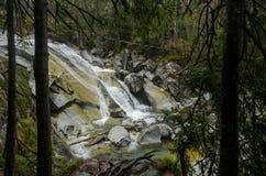 Wasserfallszene umfasst mit Kiefern - in den Bergen - Europa, hohes Tatras stockfotos