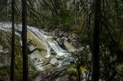 Wasserfallszene umfasst mit Kiefern - in den Bergen - Europa, hohes Tatras lizenzfreies stockbild