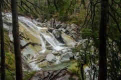 Wasserfallszene umfasst mit Kiefern - in den Bergen - Europa, hohes Tatras stockbild