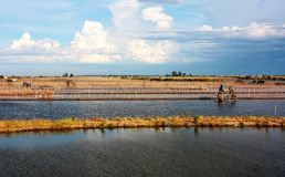 Wasserfeld bei Vietnam Stockfotografie