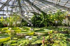 Wassergarten mit verschiedenen Spezies der Wasserpflanze Seerosen, Victoria Amazonica, Wasser-Hyazinthe, blaues Lotus Lizenzfreies Stockfoto