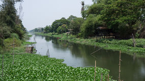 Wasserhyazinthe auf Kanal Stockbilder