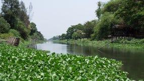 Wasserhyazinthe auf Kanal Lizenzfreie Stockfotografie