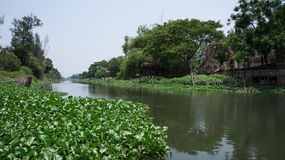 Wasserhyazinthe auf Kanal Lizenzfreie Stockfotos