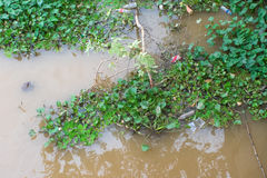 Wasserhyazinthe mit Abfall Lizenzfreies Stockbild