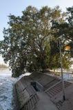 Wasserkanal und ein Baum Lizenzfreies Stockfoto