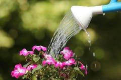 Wasserkanister, der eine Blumenanlage wässert Lizenzfreie Stockbilder