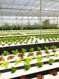 Wasserkulturanlagen im Bauernhof Lizenzfreie Stockbilder