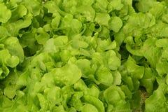 Wasserkulturanlagen im Gemüsegartenbauernhof Lizenzfreies Stockbild