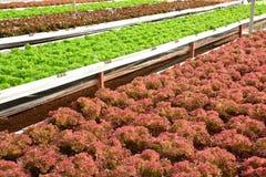 Wasserkulturanlagen im Gemüsegartenbauernhof, Lizenzfreies Stockbild