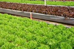 Wasserkulturanlagen im Gemüsegartenbauernhof Lizenzfreie Stockfotos