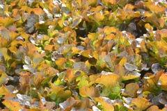 Wasserkulturanlagen im Gemüsegartenbauernhof Stockbilder