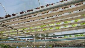 Wasserkulturbewässerungs-System am Gemüseplantagen-Bauernhof HD stock video