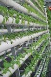 Wasserkulturgartenarbeit Lizenzfreie Stockfotos