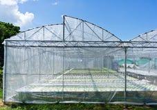 Wasserkulturgemüse Stockfoto