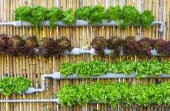 Wasserkulturvertikalen-Gartenarbeit Stockbild