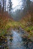 Wasserlauf im Holz im Herbst Stockfotos